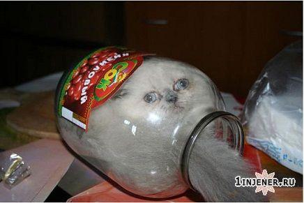 плюшевый котик в японии