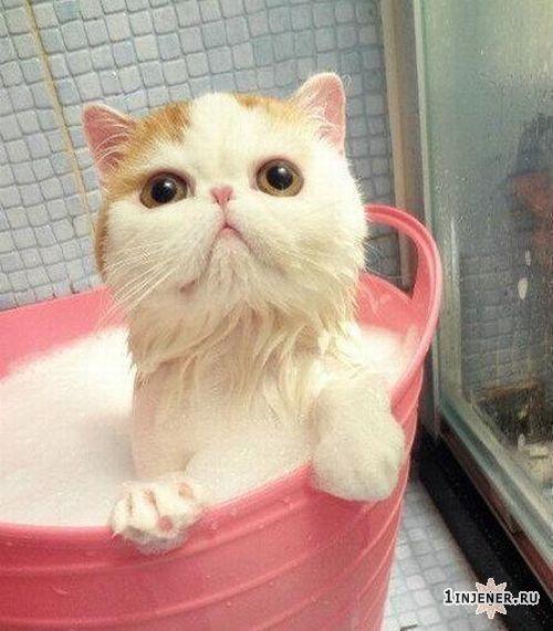 самый милый кот